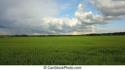 Aerial Drone Shot over Large Green Wheat Field against the background of the sky with beautiful clouds in sunny day