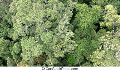 Aerial drone shot over southern forest in Malaysia