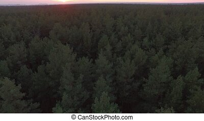 Aerial drone shot over the autumn coniferous deciduous forest on Sunset. 4K