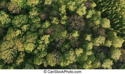 Aerial Drone Shot Over The North European Forest HD