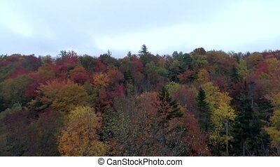 Aerial Drone - Skim Treetops in Fall in Vermont.