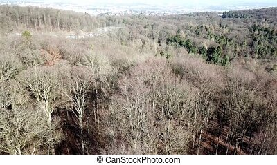 Aerial drone top view of a forest in the dead of winter without snow