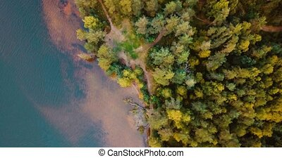 Aerial drone top view of forest and coniferous trees in the...