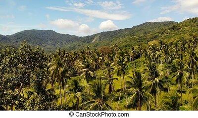 Aerial drone view, island landscape, coconut palm plantations, Thailand. Natural idyllic paradise scene. Mountain hill, tropical exotic wild jungle green rainforest. Deforestation environmental damage