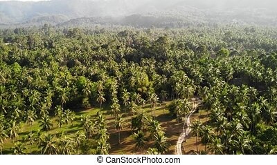 Aerial drone view, island landscape, coconut palm plantation, Thailand. Natural idyllic paradise scene. Mountain hill, tropical exotic wild jungle green rainforest. Deforestation environmental damage