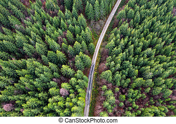 Aerial drone view of forest road