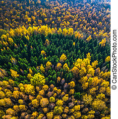 Aerial drone view of the colorful forest in Autumn