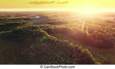 Aerial ecological forest sunset beautiful panorama shot. Ideal background for forest conservation, save biology and nature, ecology theme. Global warming and forest fire theme.