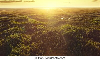 Aerial ecological forest sunset beautiful shot. Ideal background for forest conservation, save biology and nature, ecology theme. Global warming and forest fire theme.