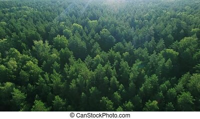 Aerial ecological green rainforests forest morning beautiful shot. Ideal background for forest conservation, save biology and nature, ecology theme. Global warming and forest fire theme.