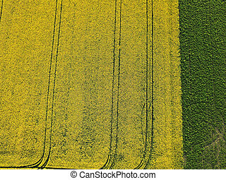 Aerial field of yellow canola and green soybean