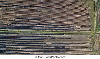 Aerial Flight Above Rice Fields