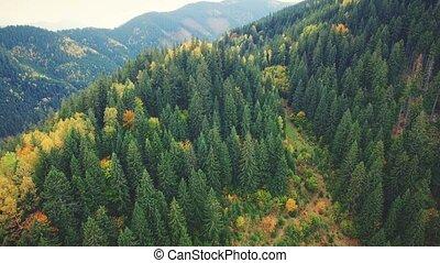 Aerial Flight in Carpathian mountains. - Aerial Drone...