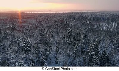 Aerial flight of a winter forest. flying over the snowy...