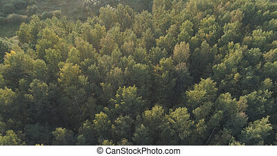 Aerial flight over autumn trees in wild park in september