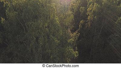 Aerial flight over autumn trees in wild park in september
