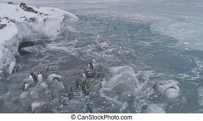 Aerial flight over close-up penguins on ice rocks.