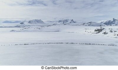 Aerial flight over penguins migration. Antarctica.