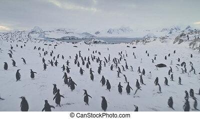 Aerial flight over penguins, seals. Antarctica.