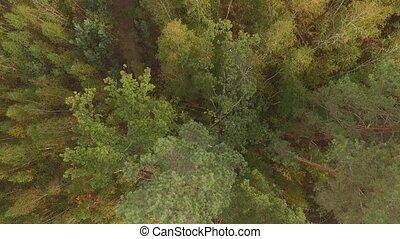 AERIAL: Flight over the autumn coniferous deciduous forest....