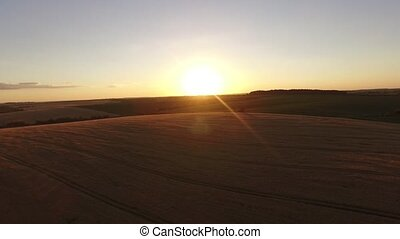 AERIAL: Flight Over the Wheat Field in Sunset Evening