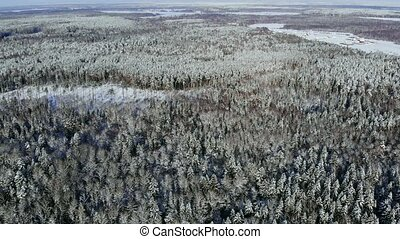 AERIAL: Flying above the car driving through snowy forest at...