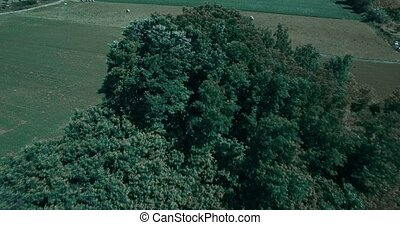Aerial, Flying Around Aera Mont De La Coche, France -...