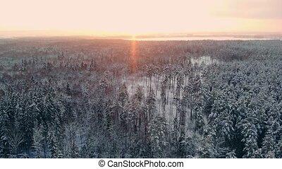Aerial footage of flying between beautiful snowy trees in...