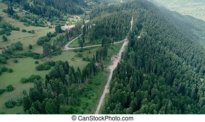 Aerial footage of pine forest
