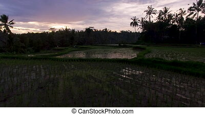 Aerial footage of rice terrace on sunset near Ubud, Bali -...