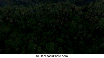 Aerial footage of rice terrace on sunset near Ubud, Bali