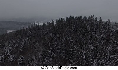 Aerial footage of the winter snow coniferous Christmas forest.