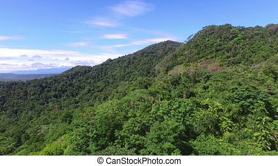 Aerial footage of trees on mountain