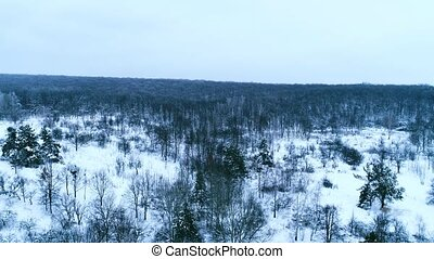 Aerial footage of winter forest