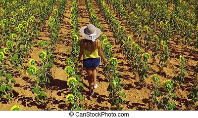 Aerial footage of Woman Walking Along Sunflowers Field. Sun Shining in summertime.