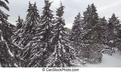 aerial:, forêt, neigeux
