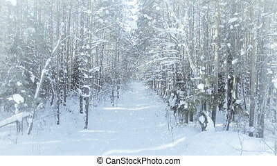 AERIAL Frozen winter forest dense, forest thicket, with nice...