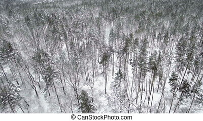 AERIAL: Frozen winter forest. Falling snow - AERIAL: Frozen...