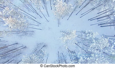AERIAL extreme frozen white winter snow forest pine top flight above trees