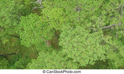 Aerial green forest, view from above.
