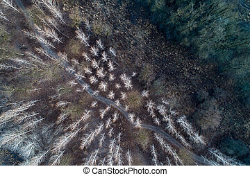 Aerial image of forest in witer