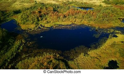 Aerial landscape of a lake in the forest at summer