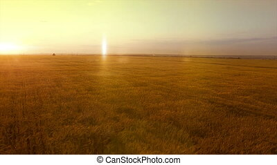 AERIAL long warm evening sunset panorama over wheat rye oats...