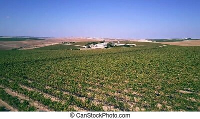 Aerial low altitude view of a vineyard and farm - Aerial low...