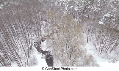 AERIAL: Low flight over snowy spruce forest in winter.