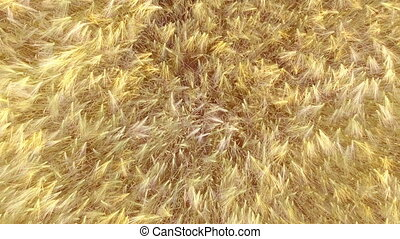 AERIAL: Low flight over wheat field