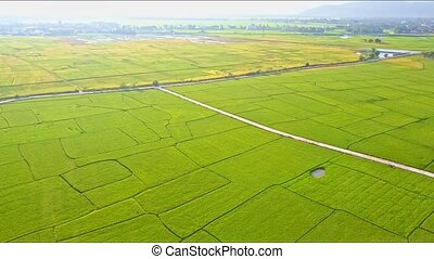 Aerial Motion Over down Rice Field with Road and Small Lake