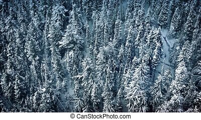 Aerial Moving Above Frozen Forest