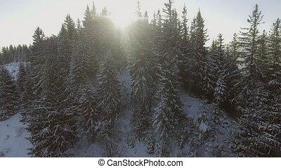 aerial:, nature, dans, hiver