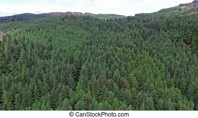 Aerial of a forest in Argyll